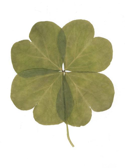 Lucky Four-Leaf Clover Print