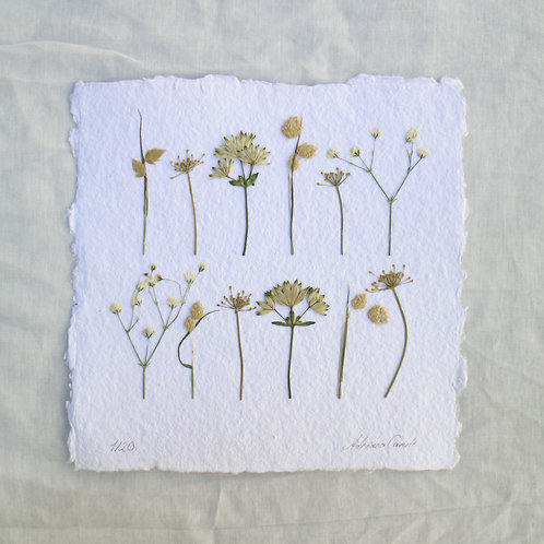 Mixed Flowers I