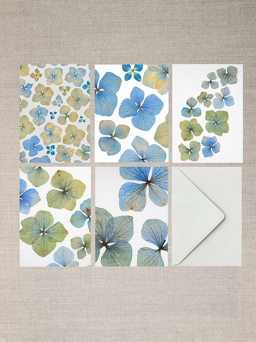 Hydrangea Greeting Cards (Set of 5)
