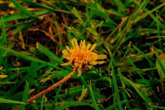 Flower test 2.jpg