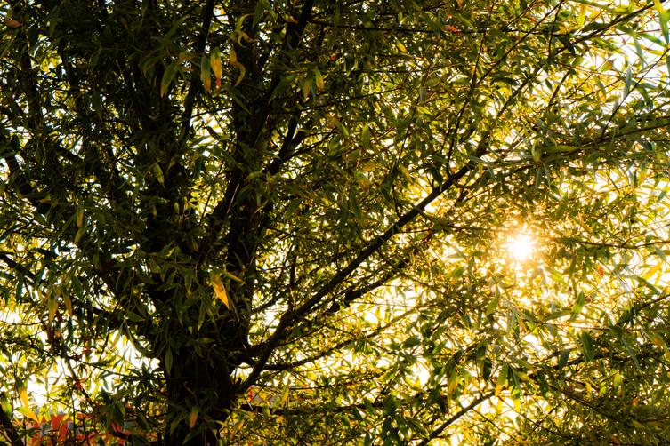 Tree through sun.jpg