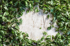Cultivate ChCh_s Kale Laid Out.jpg