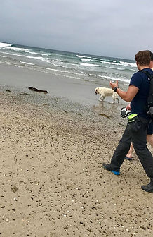 Muddy Paws Dog Training