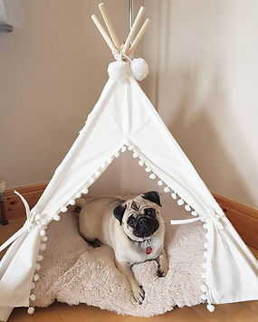 Muddy Paws Luxury Home Boarding