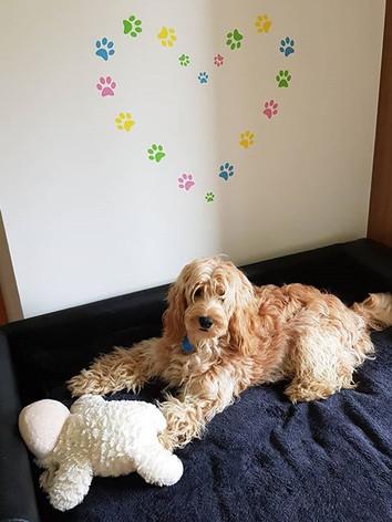Bailey enjoying some sofa time😎 . . .  #pawsup #vacationmode #dogsholiday #doghotelirelan