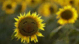 Smiling sunflower.jpg