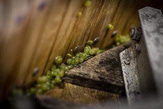 raisins dans les tonneaux