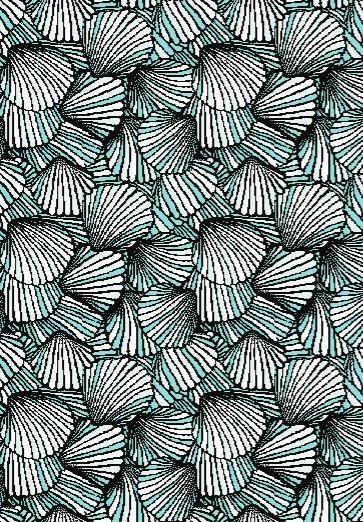 shells_edited.jpg