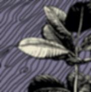 palm%20FP_edited.jpg