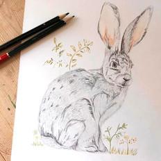 Oscar's Hare