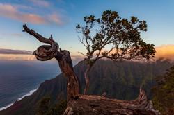 Ohia Lehua, Kauai
