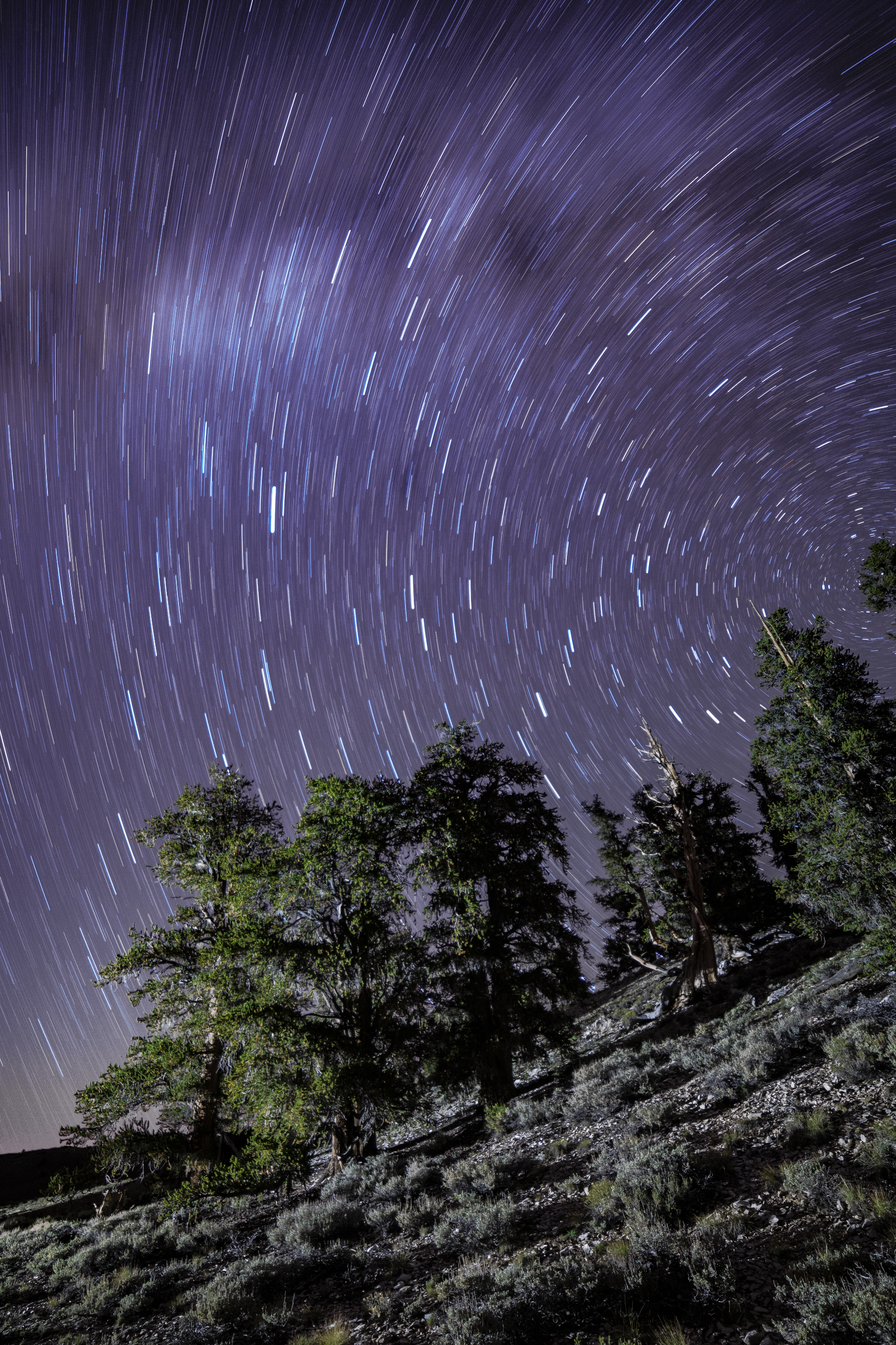 White Mountain Star Trails