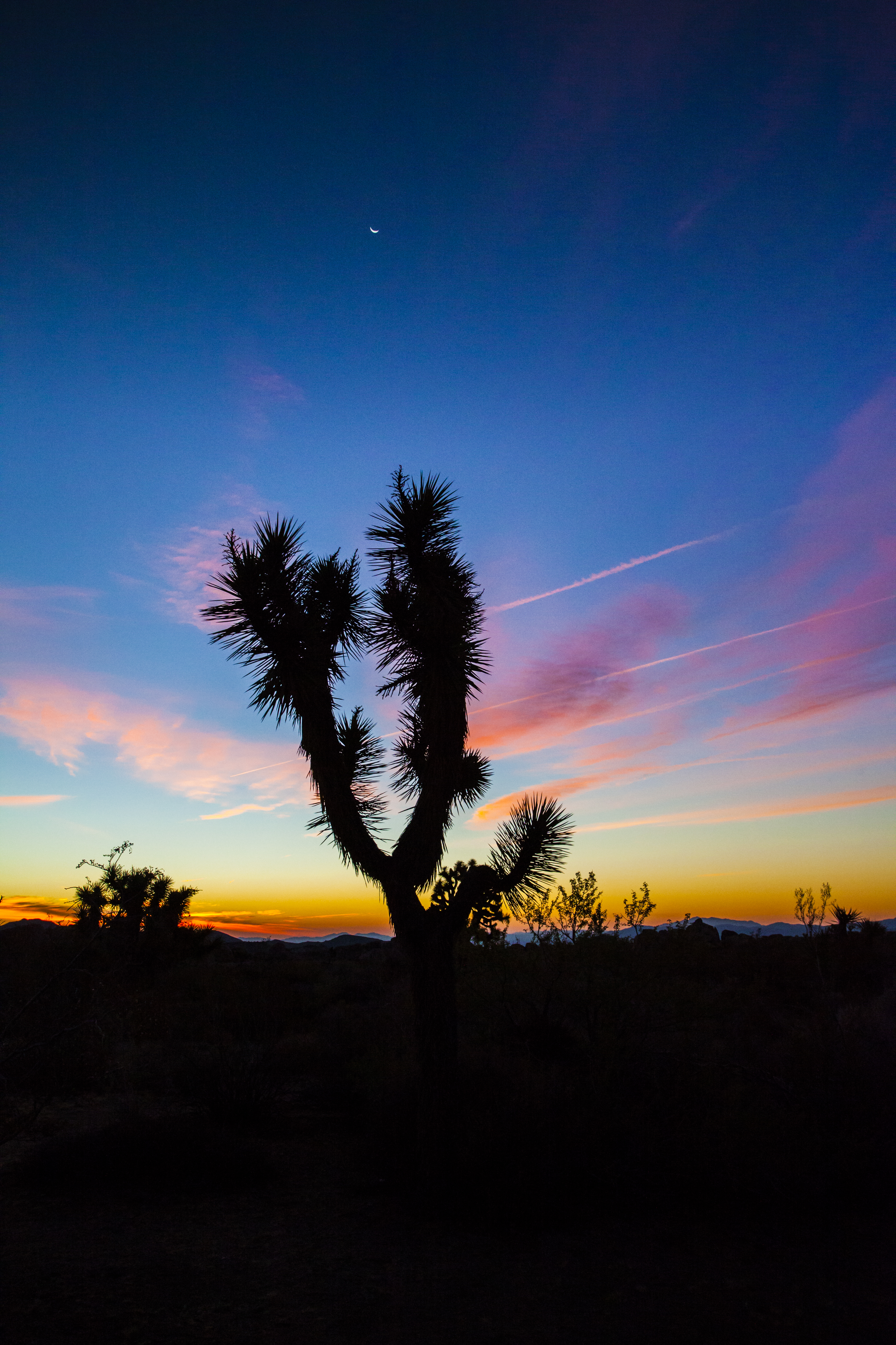 Twilight, Joshua Tree National Park
