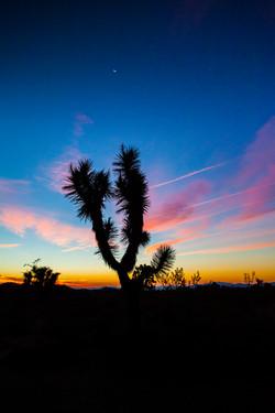 Twilight, Joshua Tree National Park