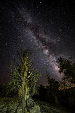 Milkyway, Ancient Bristlecone Pine