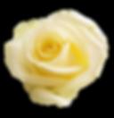 rose-3189881_1920.png