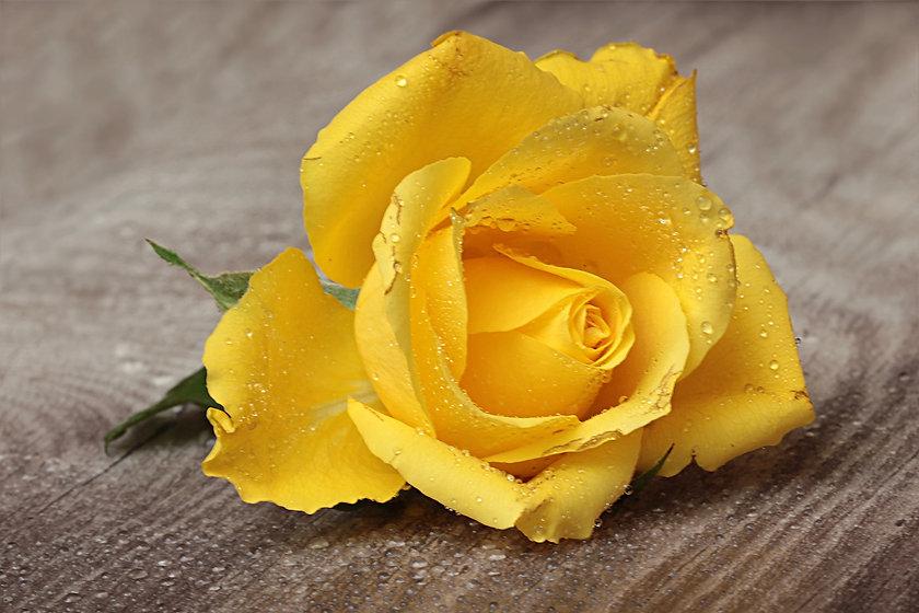 flower-842511_1920.jpg