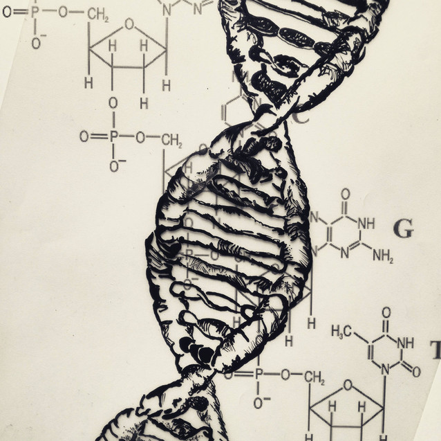 Amy Hutchings - DNA and Nucleotides