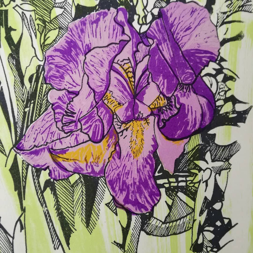 Amy Hutchings - Lillac Iris