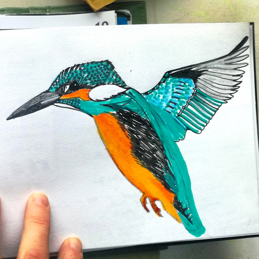 Amy Hutchings - Sketchbook Kingfisher