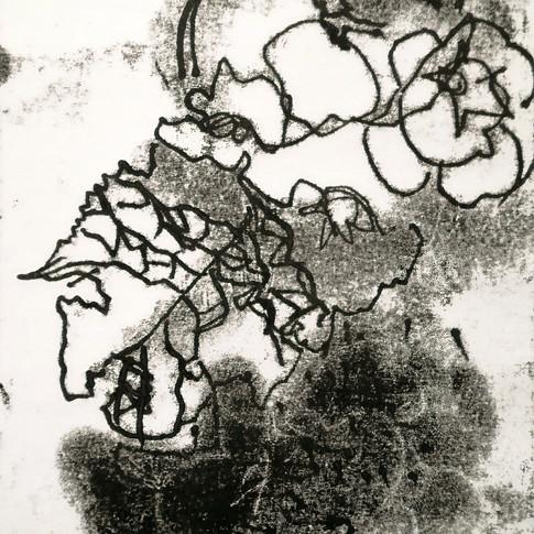 Amy Hutchings - primrose lines.jpg