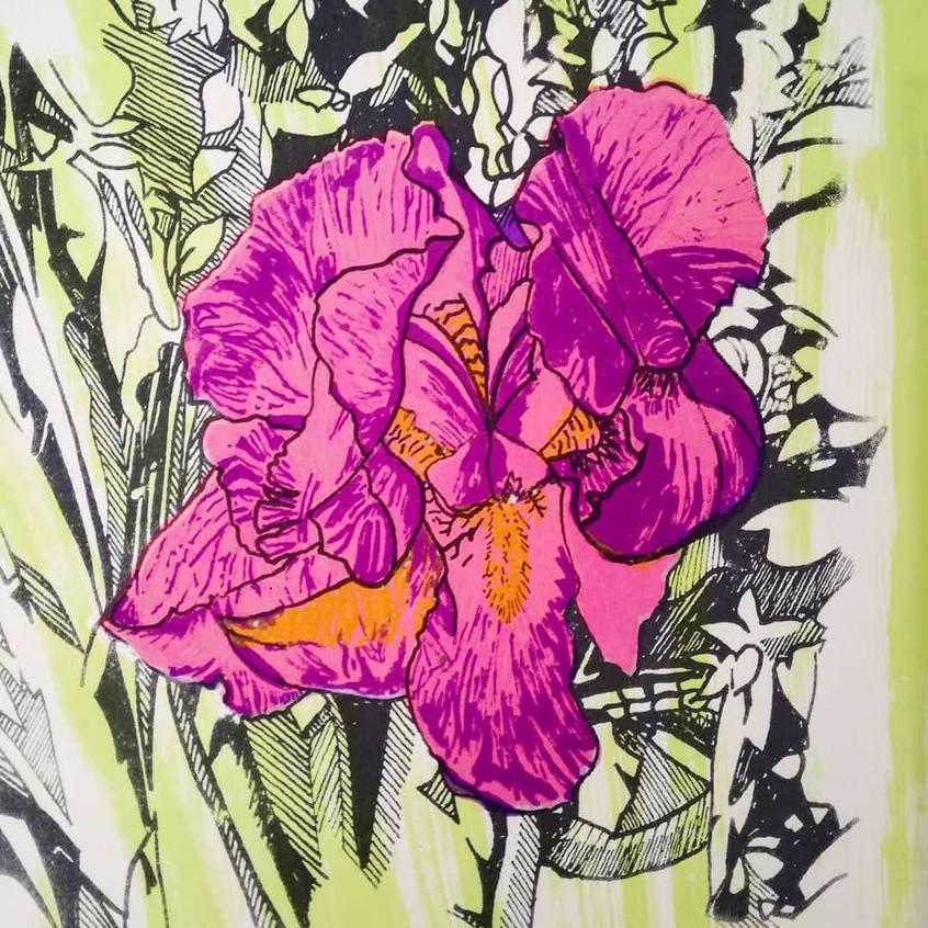 Amy Hutchings - Glowing Iris