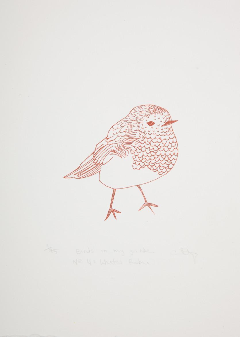 winter-robin_72dpi.jpg