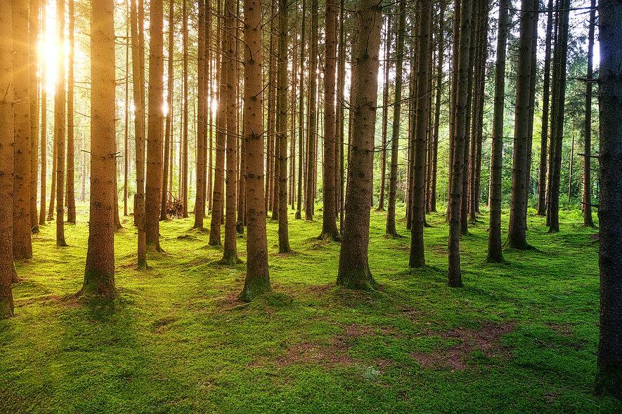 ForestHealing.jpg