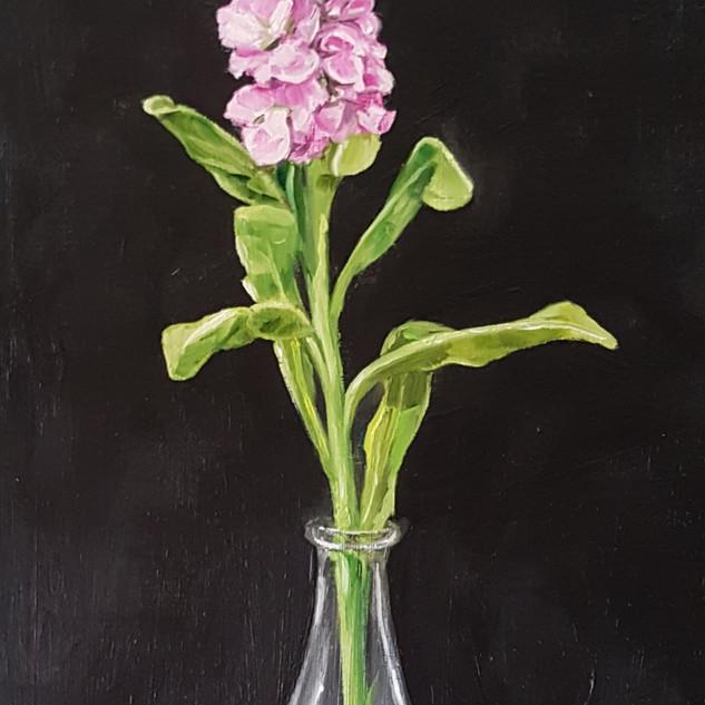 Hollyhock in vase