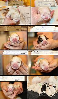 Birth details.jpg
