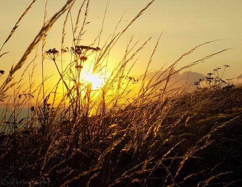 Golden Grass, Mullion