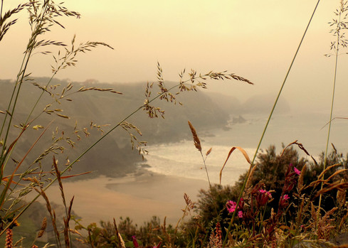 Misty Morning At Polurrian Cove