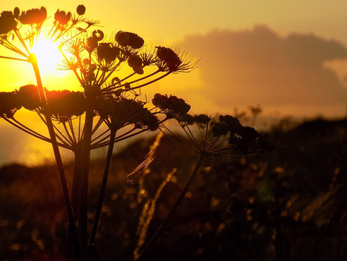 Sunset Spider, Mullion