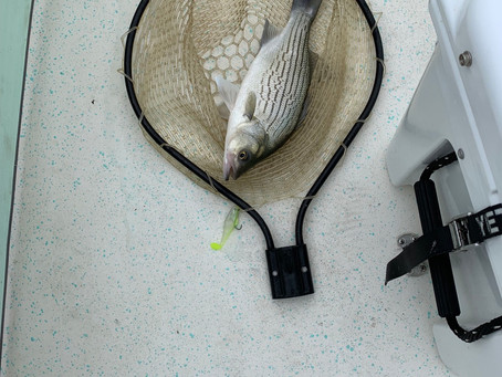 Shallow Water Hybrid Fishing