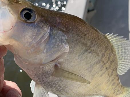January Crappie Fishing