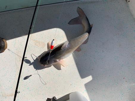 November Catfishing