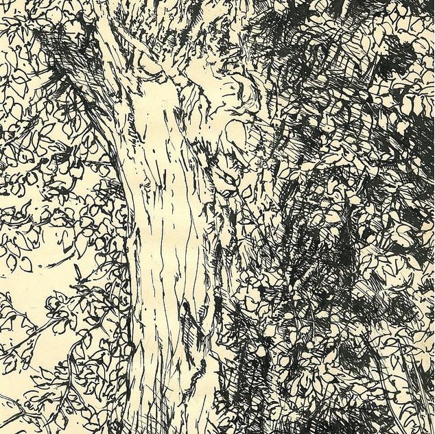 Tree Amboise 1967 8x6 in.jpg