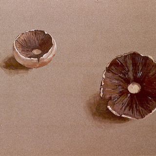 Mushrooms 1979 7x11 in.jpg