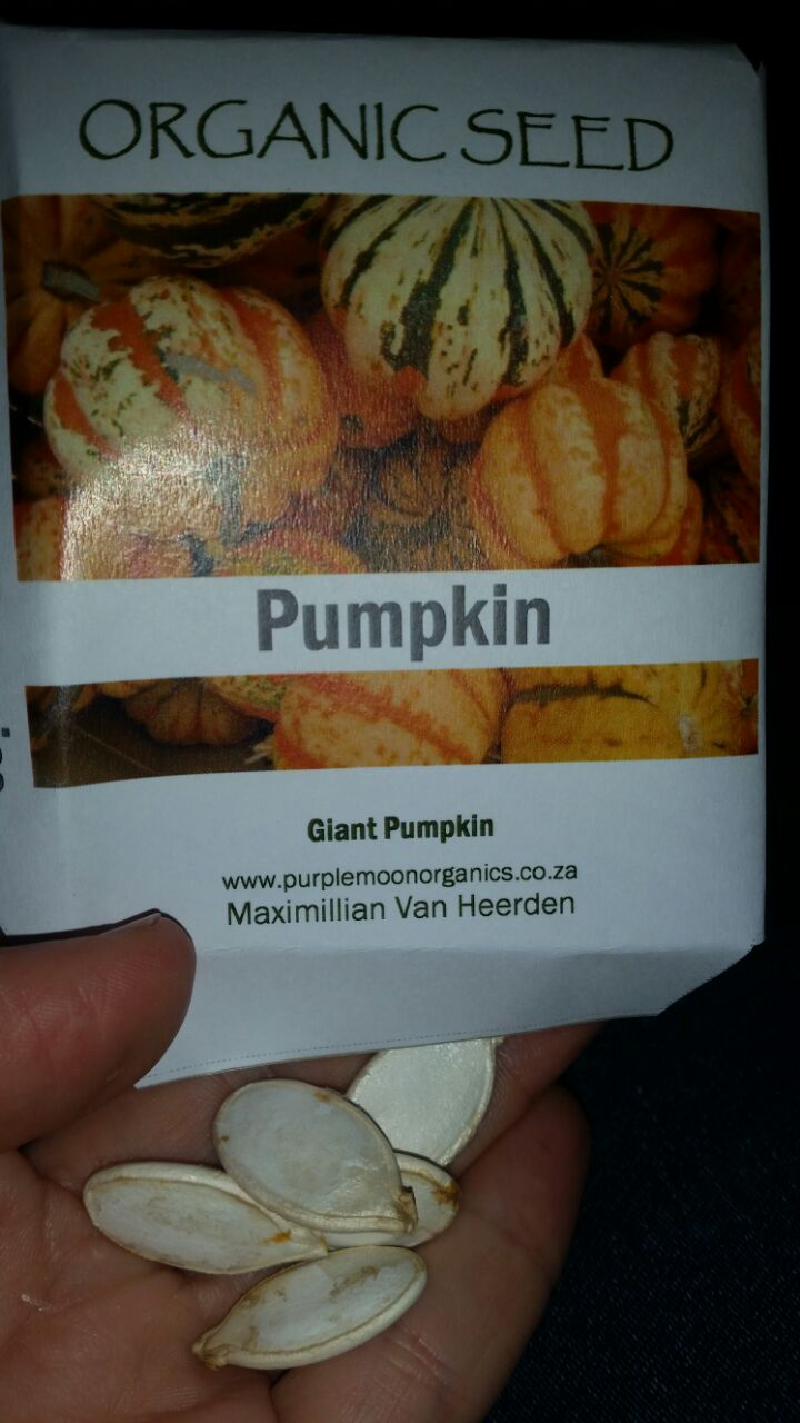 Giant Pumpkin Seeds