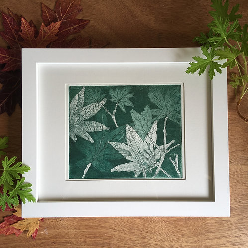 Acer, Japanese maple leaves etching print