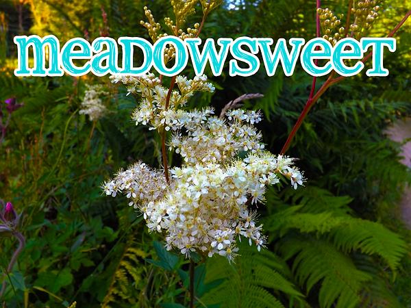 meadowsweet.png