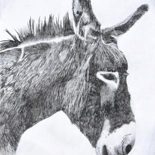 Donkey II