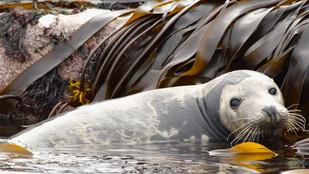 Seals at St. Mary's I
