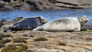Seals at St. Mary's III