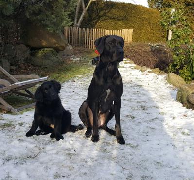 Wilma und Frieda im Januar 2019