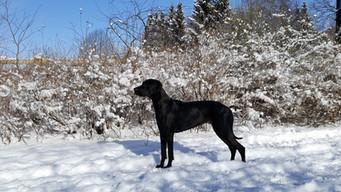 Frieda Dezember im Schnee