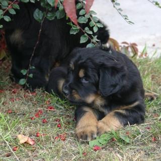 30.09.2009 Emira