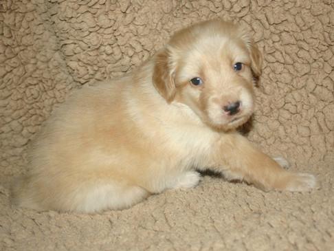Gus 4 Wochen alt