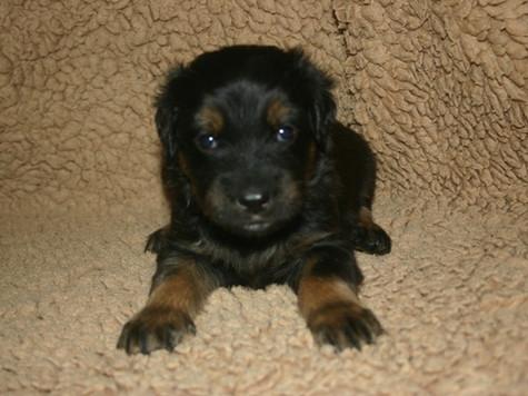 George 4 Wochen alt