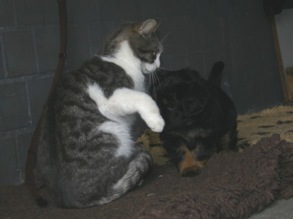 Ella und Mietzi